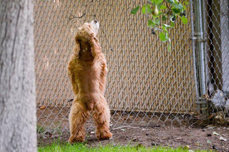 """Résultat de recherche d'images pour """"chien qui urine sur personne"""""""