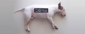 funny bull terrier