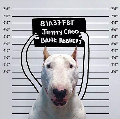 rafael mantesso instagram bull terrier 13