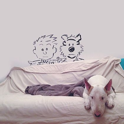 rafael mantesso instagram bull terrier 19