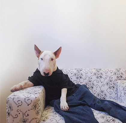 Rafael Mantesso - Instagram - Fun avec son Bull terrier