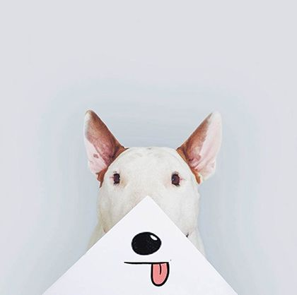 Rafael Mantesso - Instagram - Fun avec son Bull terrier
