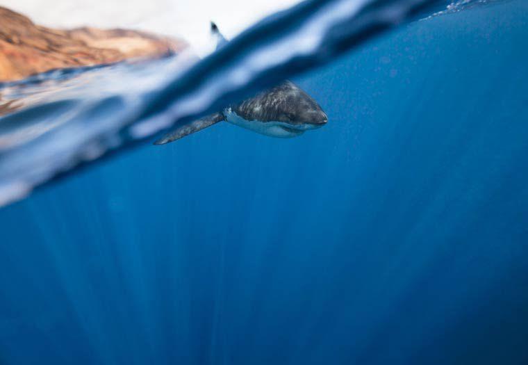 corey-arnold-ocean-requin
