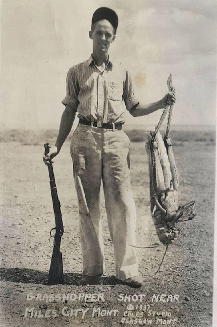 chasseur-sauterelle-geante