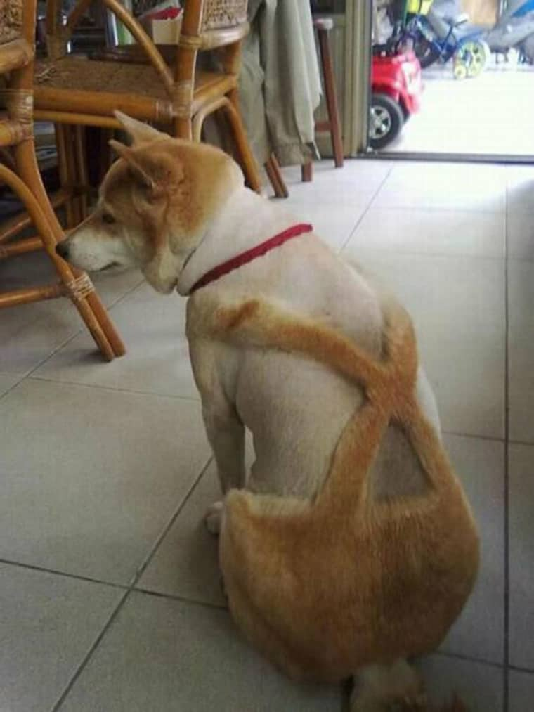 chien-salopette