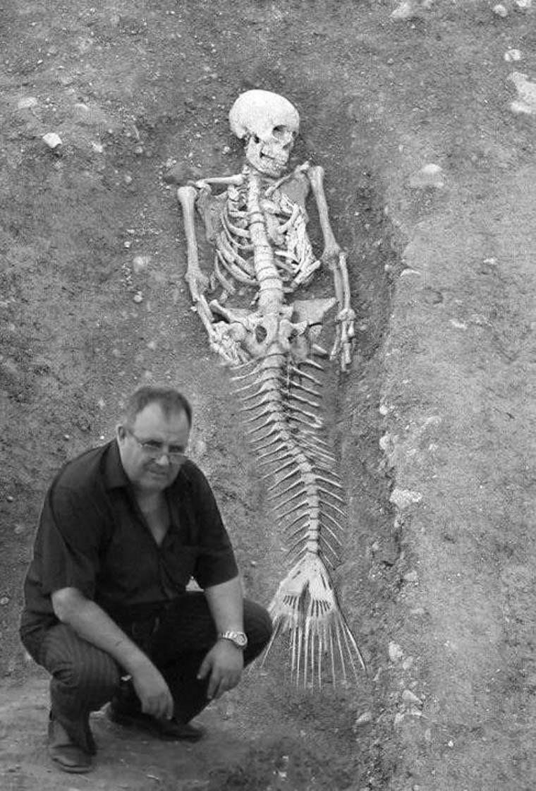 decouverte sirene squelette