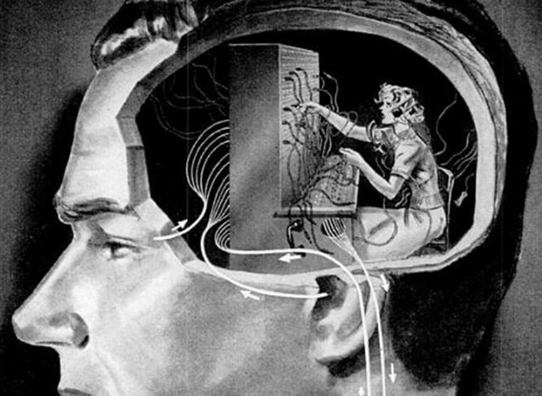 femem dans cerveau homme