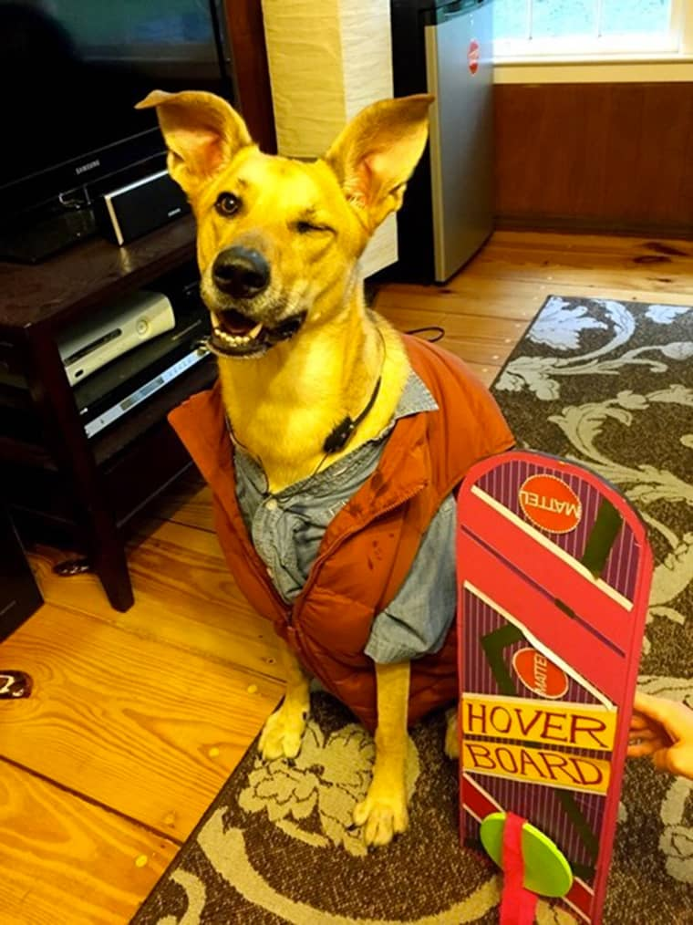matry-mcfly-dog
