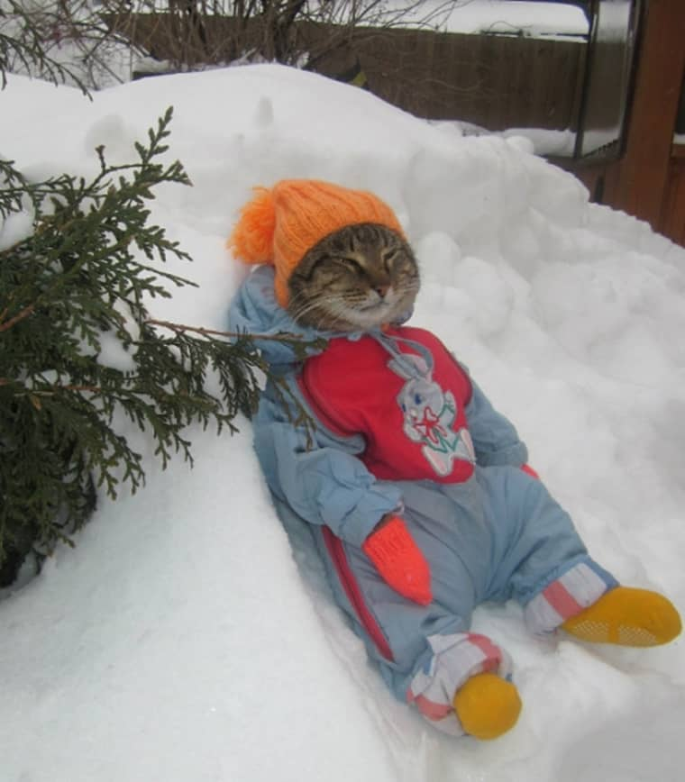 un-chat-en-tenue-de-ski