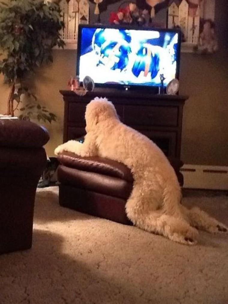 un chien relaxe