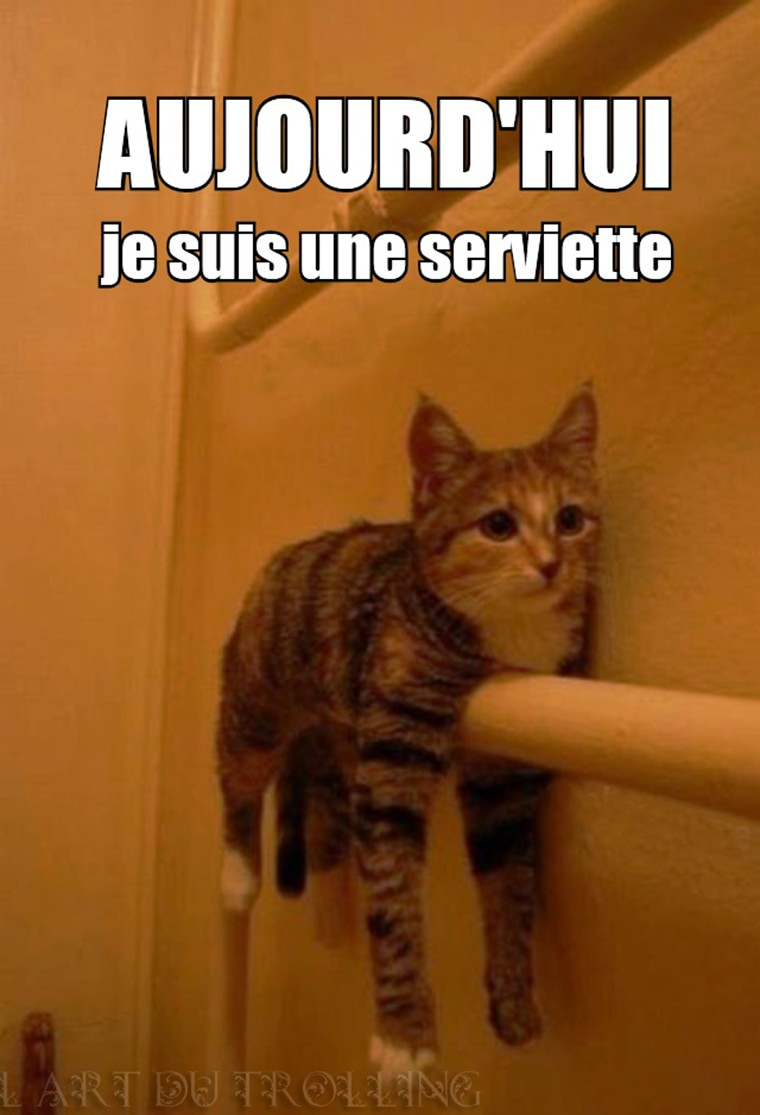 chat serviette