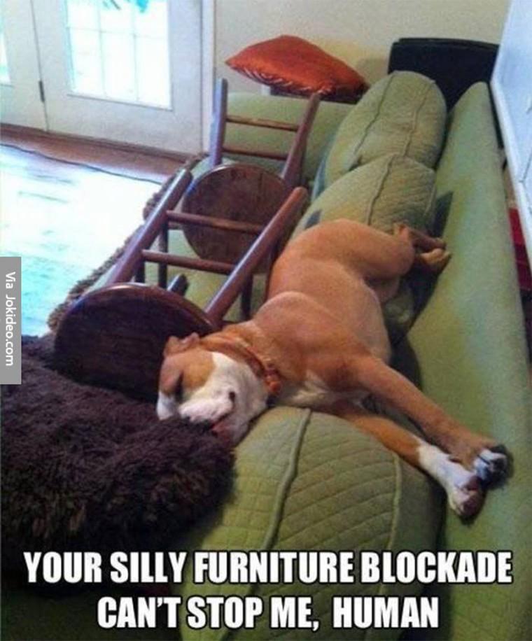 chien interdit de canape