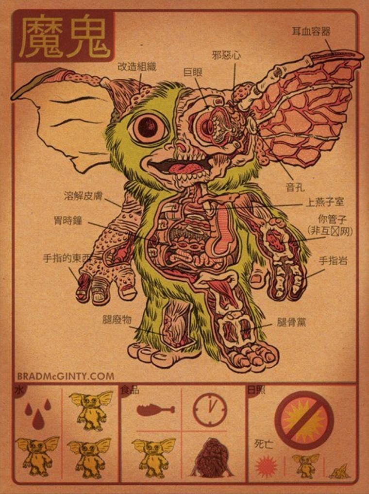 anatomie d un mogwai