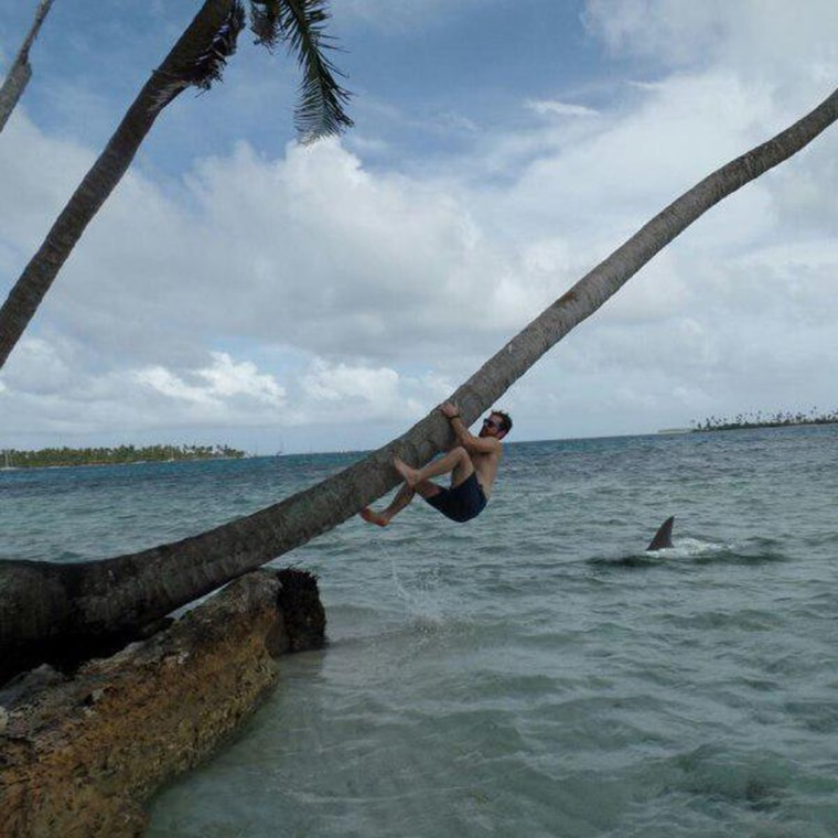 il monte sur un cocotier attention requin