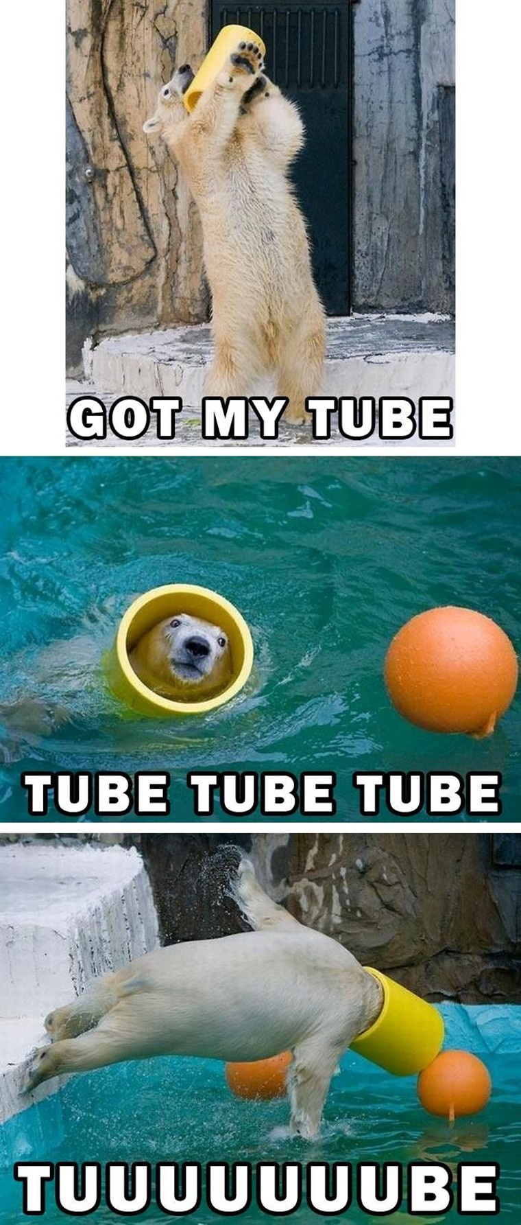 tube et ours polaire