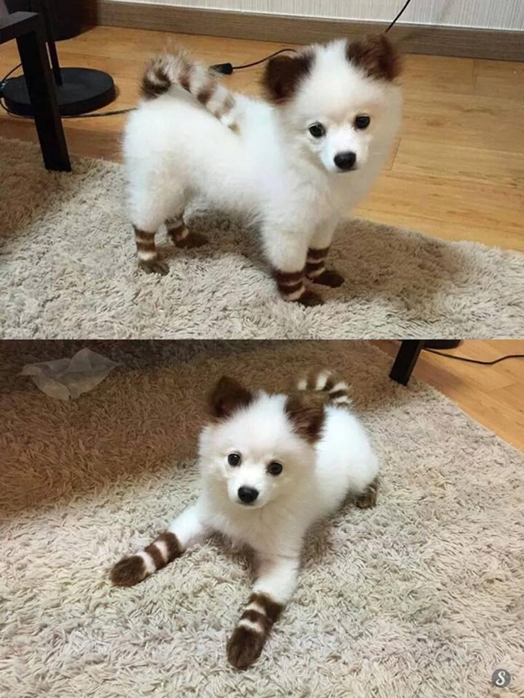 un chien en chaussettes