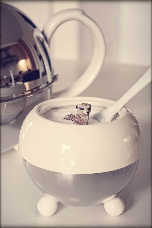 bettina-guber-suricate-miniature