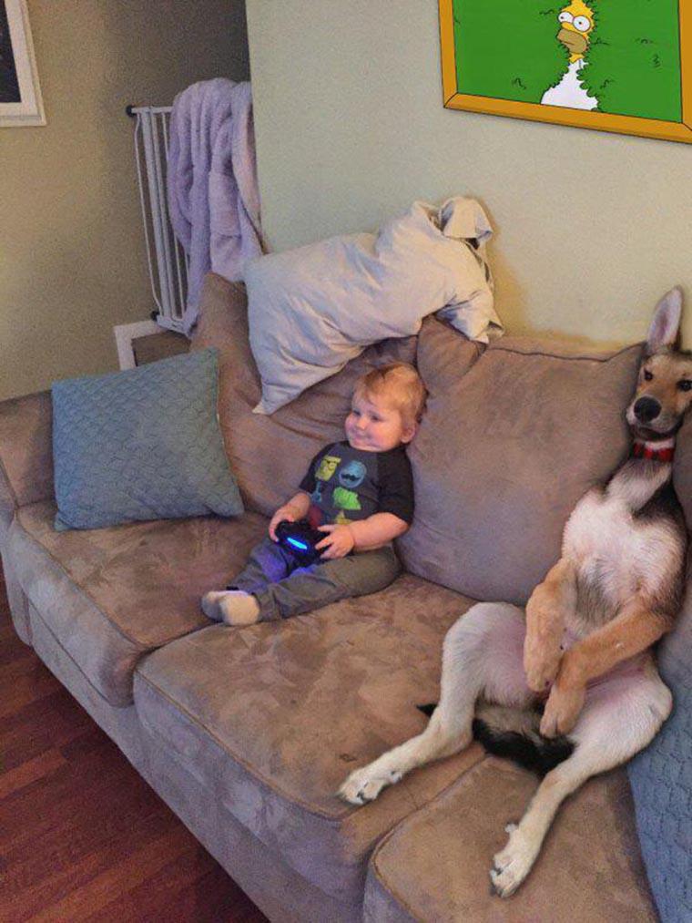 fun bebe chien et homer
