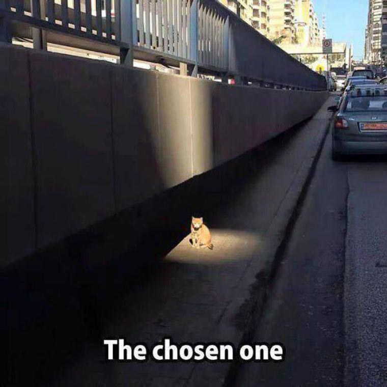 humour-chat-the-chosen-one
