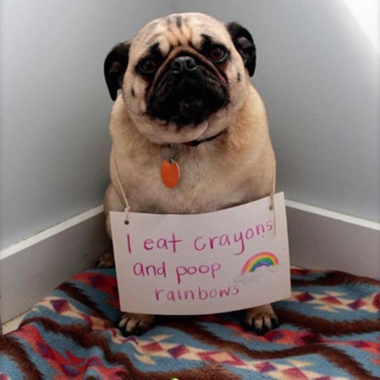 humour-chien-je-mange-des-crayons-et-chie-des-arcs-en-ciel