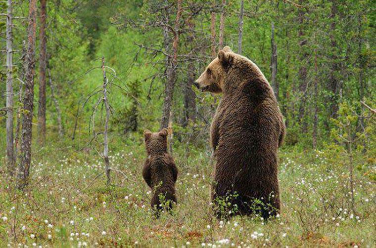 humour un ours et son ourson qui pissent debout