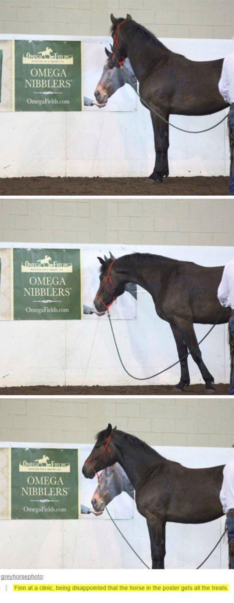 un cheval se fait avoir avec une publicite