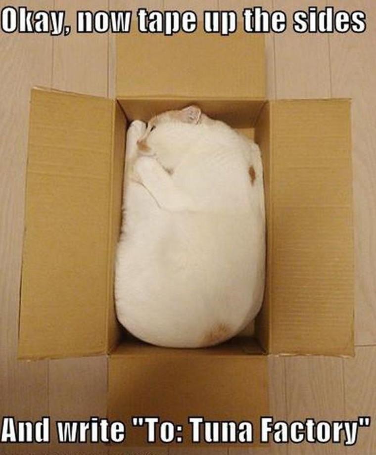 humour chat dans un carton