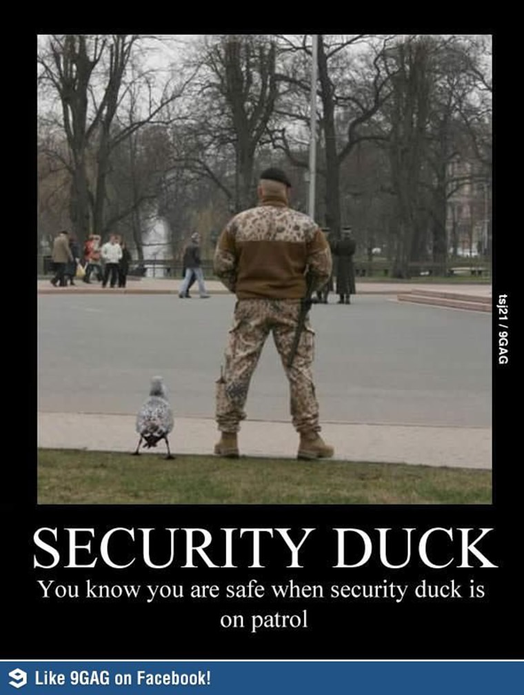 security-duck
