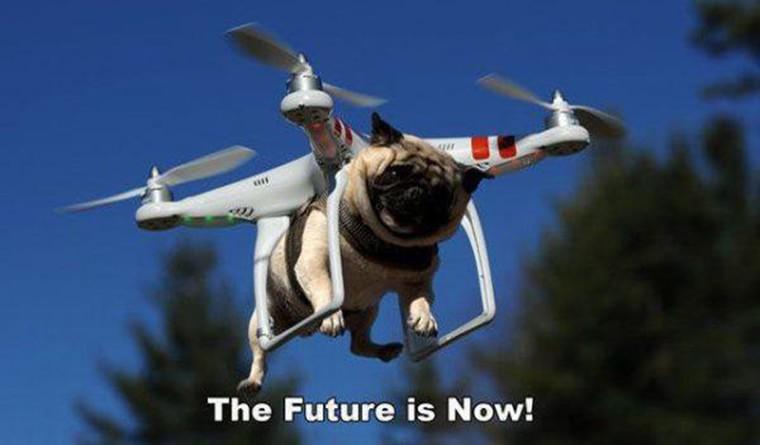 un chien drone