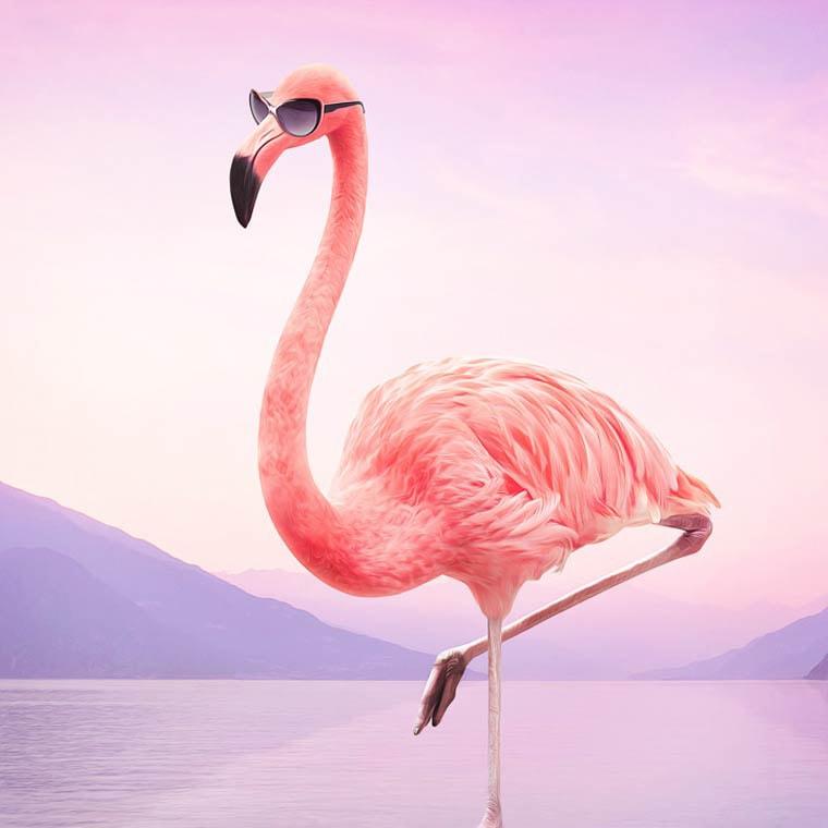 Murat-Sayginer-flamant-rose-lunette-de-soleil