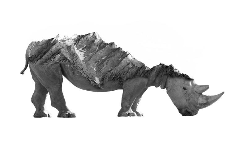 rhino montagne