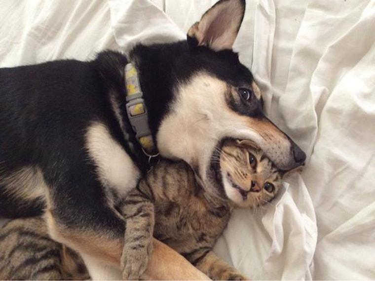 un chien aime trop son chat