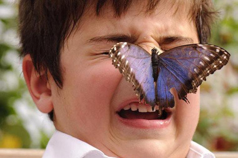 un papillon bleu se pose sur son nez