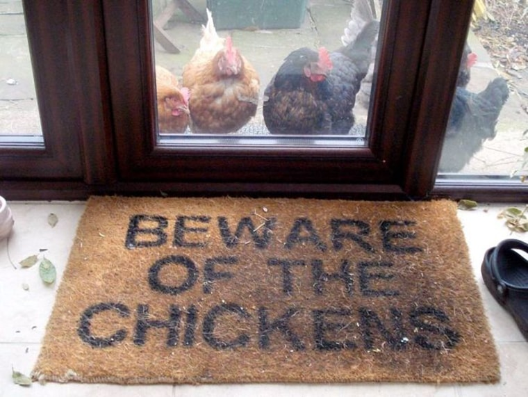 attention aux poulets