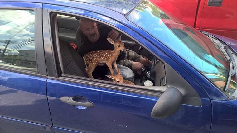 bambi pris en stop