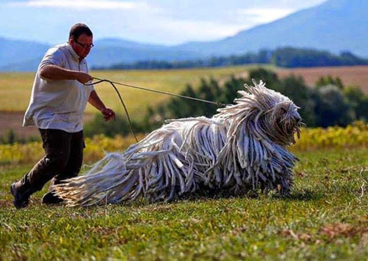un chien balai