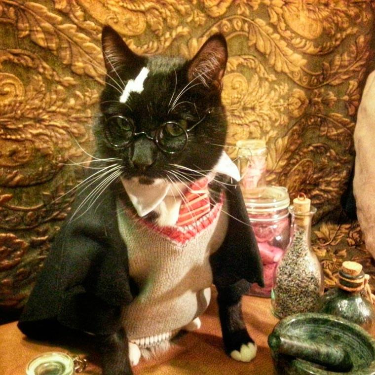 Cat Cosplay harry potter