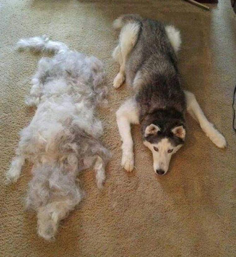 comment-peigner-son-chien