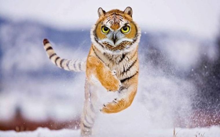 le tigrou moitie tigre moitie hibou
