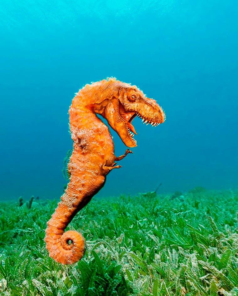 un-hippocamposaure