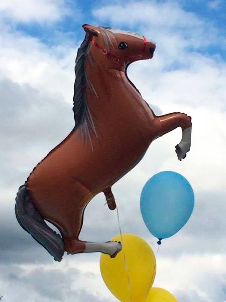 ballon cheval sexe
