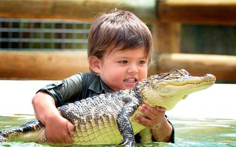 bebe aligator