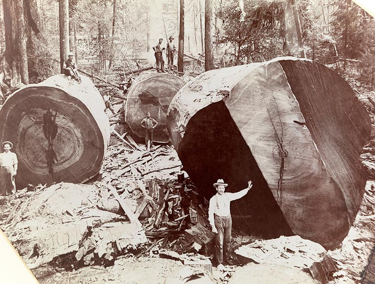 garde forestier usa 1909