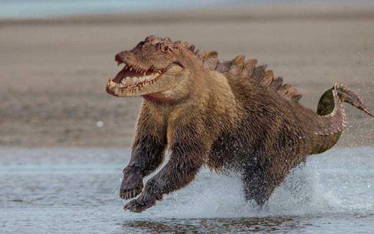 crocours mi crocodile mi ours brun