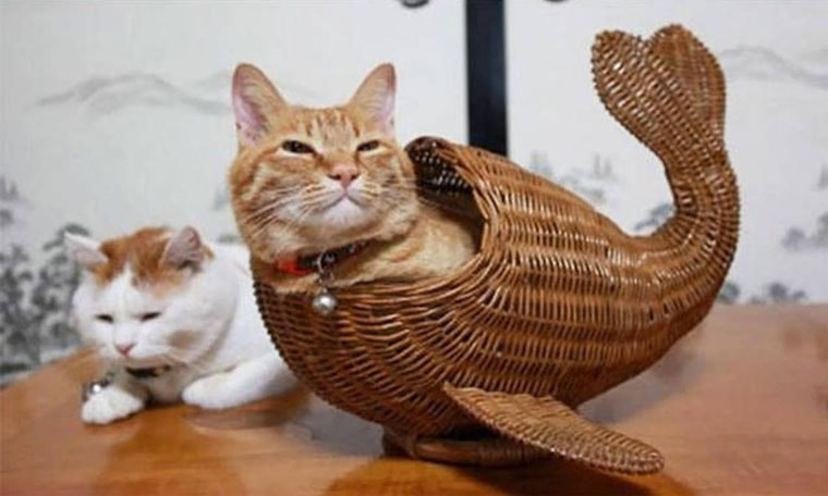 etrange poisson chat