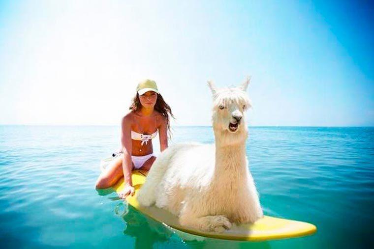 paddle-lama