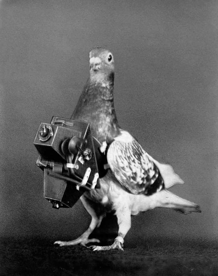 pigeon-drone-armer