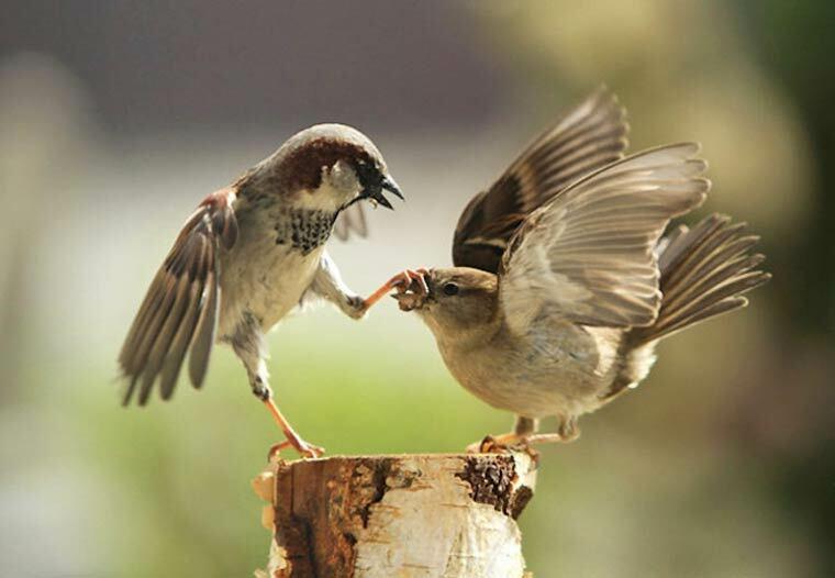 dispute oiseau ferme ton bec