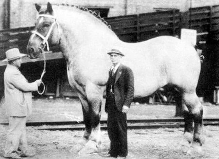 maxi cheval