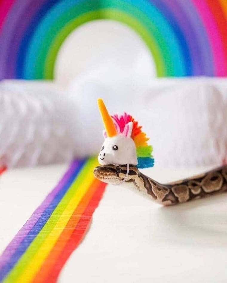 serpent licorne